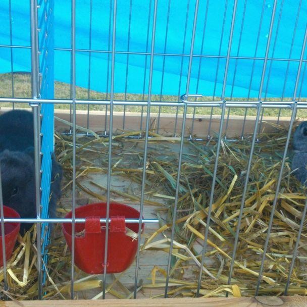 Výstava chovateľov 2015