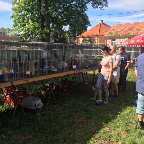 Propagačná výstava chovateľov na 1 mája 2018 v Topoľčiankach