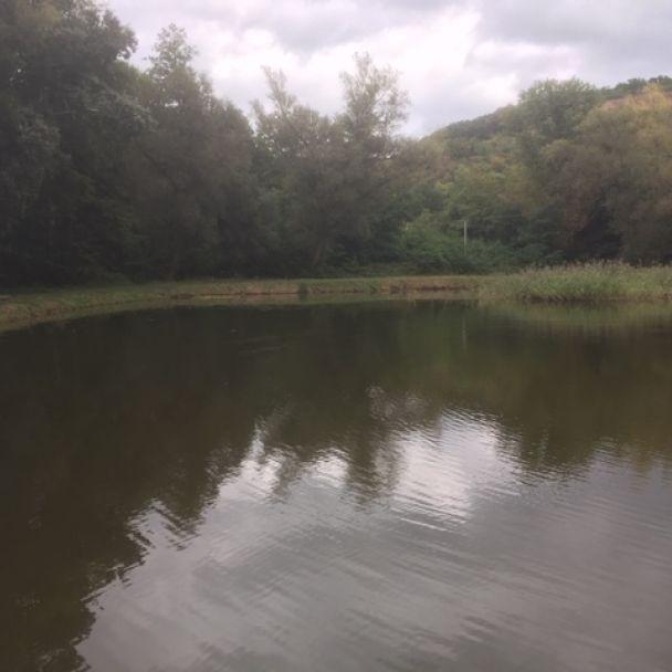 Jeseň 2019 na rybníku
