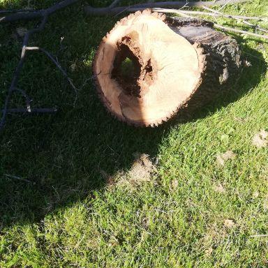 Odstránenie poškodeného stromu Javor mliečny v areáli miestneho cintorína